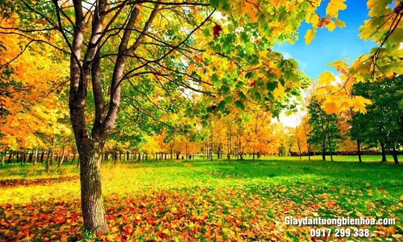 Tranh 3D dán tường phong cảnh mùa thu tuyệt mỹ